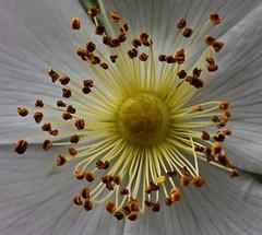 Orbit (heinrich_511) Tags: world sun flower macro love heart d750 planets sciencefiction lh universe eternity hmm orbit