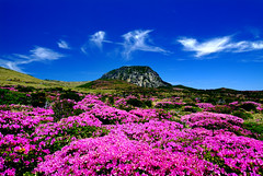 Halla Mountain in Jeju-do (KOREA.NET - Official page of the Republic of Korea) Tags: trip travel nature korea southkorea jeju rok jejudo republicofkorea jejuisland