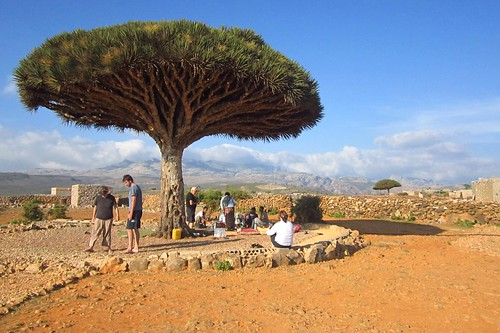 Lunch under a dragon blood tree