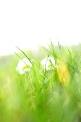 Daisy (NBPhotoDK) Tags: autumn two flower color green grass blurry warm alone bokeh pair daisy abanded