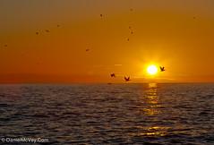 Pelican Fly-By: Left Coast, Florida (Daniel G McVey) Tags: venice light sunset seascape gulfofmexico weather boat unitedstates florida jetty country places vehicles manmade gulfcoast landscapephotography leftcoast photographytechniques copyrightdanielmcvey danielmcvey