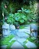 ~~International Palm Society Meeting #2~~ (TravelsThruTheUniverse) Tags: tropicalplants tropicalflowers exoticgardens zengardens tropicalgardens tropicalfoliage californiagardens subtropicalgardens tropicallandscapes subtropicallandscapes internationalpalmsocietymeetnortherncaliforniachapter
