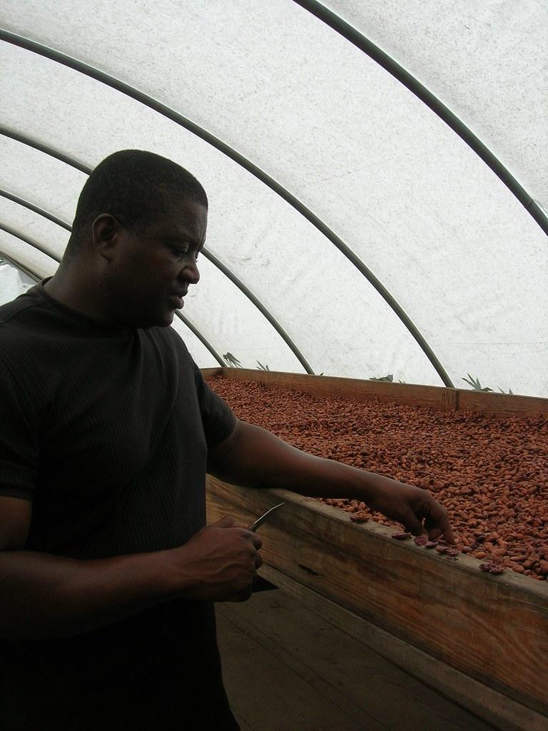 Sechage cacao