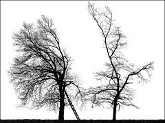 Separation (RainerSchuetz) Tags: tree silhouette geotagged highkey deerstand raisedhide geo:lat=5155910301 geo:lon=950095510