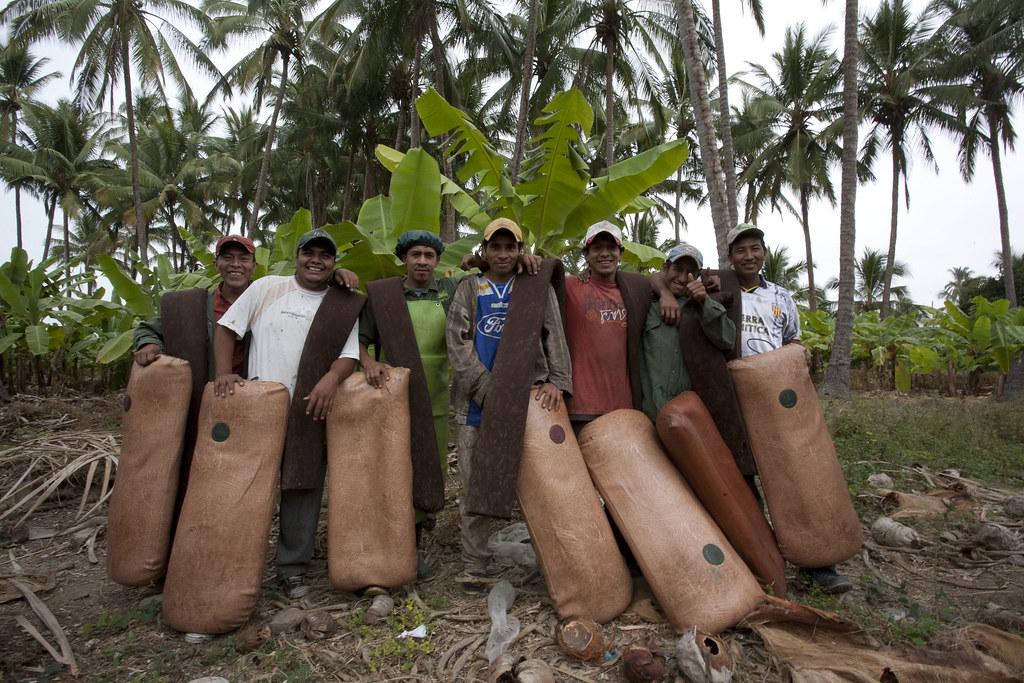 Plantation de bananes - Equipe de ramasseurs