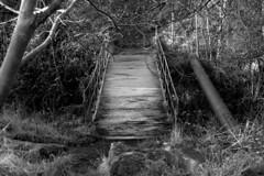 Bridge (Tronnnnn) Tags: white black 50mm prime nikon shipley industar d90