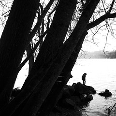 Sur le lac (sparth) Tags: park trees winter bw lake water silhouette square blackwhite washington highcontrast lac son washingtonstate iv ricoh noirblanc carre grd sooc grd4 saintedwardsstatepark bwsquare blackandwhitesquare ricohgrdiv grdiv