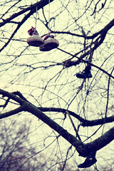 Here there be shoes (xibalbax) Tags: tree canon shoe shoes branch dof branches 7d 1755mm canoneos7d