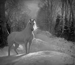 Snow Stallion (rubyblossom.) Tags: old white snow black track railway software rubys stallion resources topaz rubystreasures