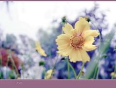como esperando abril < > as be waiting for april