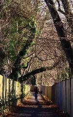 Path beetween Griesbach garden and botanical garden (:Linda:) Tags: people man tree architecture germany one town university path ivy jena thuringia trail einsamkeit weg einsam efeu allein lonesom friedrichschilleruniversitt griesbachgarten