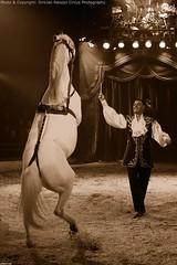 Winter Circus Louis Knie, Holland, December 2011 (dirkjanranzijn) Tags: show horses horse public smile laughing fun big nikon funny circo audience circus top clown magic centre performance sigma tent ring entertainment artists laugh comedian entertainer 28 juggling juggler clowns pferd 70200 act zelt cirkus magician manege acts piste publikum zirkus nummer d700