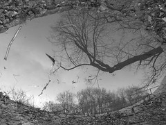 IMG_6006 (mywonderland) Tags: blackandwhite reflection cadburyhill