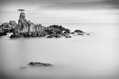 B O N Z A I (Geoffrey Gilson) Tags: white black tree de landscapes mar spain rocks long exposure zen bonzai lloret waterscapes nd500