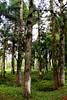 72379A_TADEU NASCIMENTO_ESTRADA GRACIOSA PARANA (Tadeu_Nascimento) Tags: paraná água brasil natureza estrada curitiba neblina rios árvores flôres estradadagraciosa hortências tadeunascimento