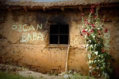 Ozcan Baba