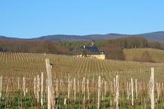 Schloss Vollrads - Castle Vollrads (ivlys) Tags: winter castle sunshine germany deutschland vineyards winkel rheingau sonnenschein weinberge schlossvollrads ivlys
