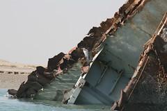 Wildlife on a shipwreck, Khor al-Zubair, Iraq