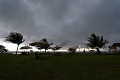 #850C9731- Windy day (crimsonbelt) Tags: trees storm beach nature rain clouds wind balikpapan melawai