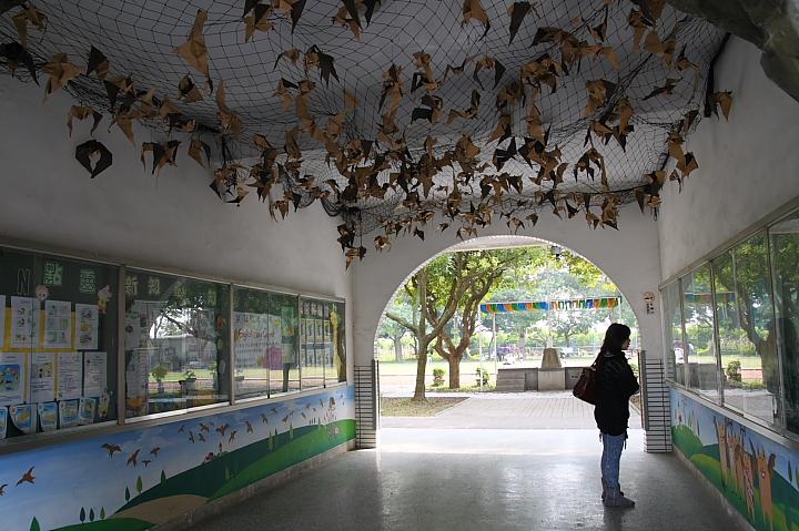 雲林水林黃金蝙蝠生態館(誠正國小)0031