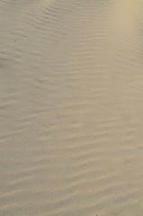 rippled sand (palmerkim29) Tags: texture beach sand ripple windblown