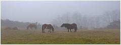 Niebla en el monte Larun (Luis M) Tags: caballos spain monte niebla navarra panormica larun bera veradebidasoa afiiae