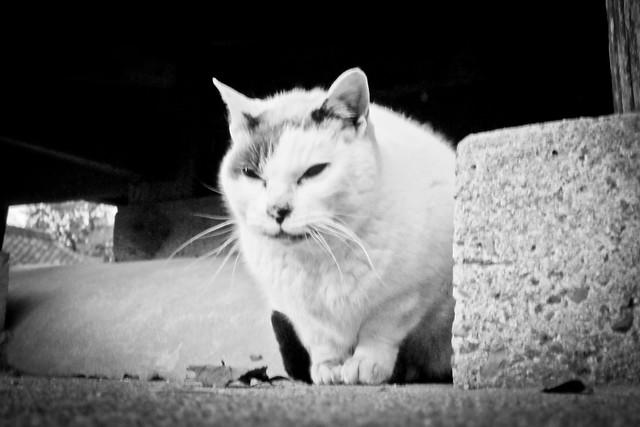 Today's Cat@2012-02-02