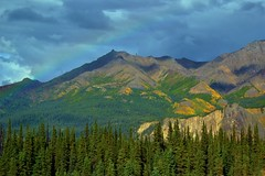 Rainbow over Alaska, mountains in Denali National Park (blmiers2) Tags: travel blue mountain mountains green nature yellow alaska landscape rainbow nikon over rainbows denali d3100 blm18 blmiers2