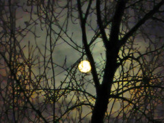 Moonlight Mosaic (LostMyHeadache: Absolutely Free *) Tags: trees sky moon nature night clouds twilight nikon cloudy branches dramatic overcast eerie fullmoon spooky davidsmith calgaryalbertacanada regionwide