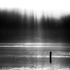 (sparth) Tags: seattle morning trees bw lake water blackwhite washington minimal vision wa washingtonstate sammamish lakesammamish carre bwsquare blackandwhitesquare 5dmkii