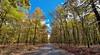 Foloi oak Forest (Nikos Golfis) Tags: ringexcellence tplringexcellence foloi flickrtravelaward eltringexcellence