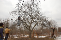 "Apple Pruning Party <a style=""margin-left:10px; font-size:0.8em;"" href=""http://www.flickr.com/photos/91915217@N00/13528551314/"" target=""_blank"">@flickr</a>"