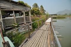 Nam Sang Wai (mawingchung,,,) Tags: china park sky macro tree hongkong nikon hong kong  kowloon    d800e