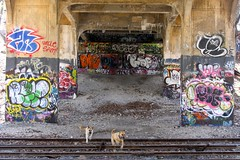 library (kewguys) Tags: park street nyc railroad urban streetart art forest graffiti lads sam uncle queens shepador
