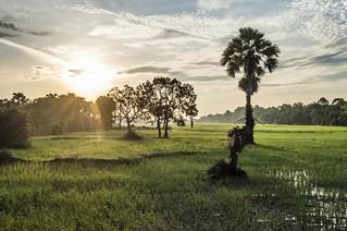 angkor - cambodge 2014 100