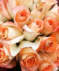 Happy Mother's Day (Marco Wence) Tags: flores flower fleur rose fleurs flor rosa bouquet mothersday zamora dadelasmadres arose palecolors ramosderosas rosasparamam floresparamam marcowence tequieromam eneldadelamadre