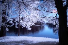 "Summerfeeling ("" Bernhard Witt "") Tags: lake nature infrared infrarot zeiss1680 sonya700"