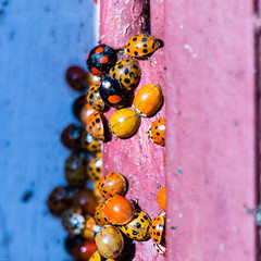 insecte (2 sur 12) (Fabienne Flouret) Tags: macro nature printemps coccinelle fabiennebenard