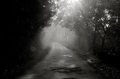 O Outro lado... (Emilio Romanos Fotografa) Tags: galicia galiza niebla bruma camio nevoa salgueiros vilacha
