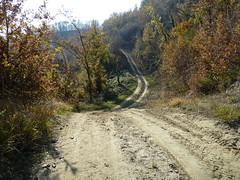 P1000158 (gzammarchi) Tags: strada italia natura campagna paesaggio collina bosco camminata sterrato itinerario sassoleone casalfiumanesebo