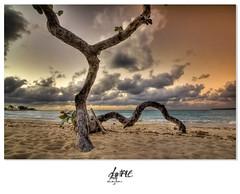 Colori_SpiaggeDiCuba (Alessandro Ciabini) Tags: sunset sea panorama color tree beach nature colors canon landscape paradise tramonto mare cuba natura exotic eden 1001nights colori hd