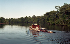 Nutria on the Samiria 35mm (edwin.quast) Tags: film peru 35mm river boat amazon nutria samiria