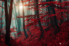 land of elves (ildikoneer) Tags: wood autumn trees light shadow mist tree fall nature colors leaves fog forest canon season landscape eos leaf hungary mood bold pilis dobogk 40d colorphotoaward