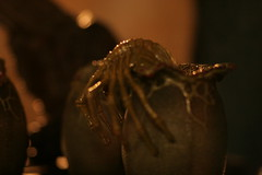Facehugger (Shani Chevalier) Tags: orange monster closeup movie fantastic alien exhibition creepy organic facehugger chestburster alienqueen fantasticfilmfestival