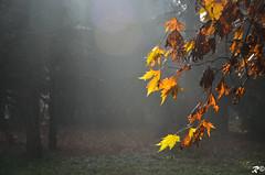 Si sta come d'autunno. [EXPLORE] (Riccardo Brig Casarico) Tags: light sun colors alberi wow colori luce brig riki brigrc