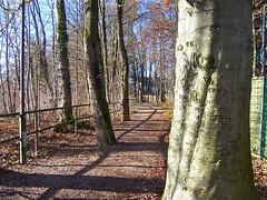 Baum am Weg (marion streich) Tags: trees nature sunshine bayern path natur dezember sonne bäume weg pullach meinfreundderbaum schattenshadow pathcaminhos handselectedphotographs