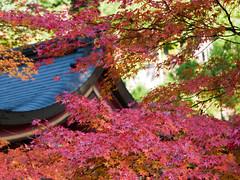 Jingoji Temple () Tags: japan temple kyoto panasonic      gf1  45175mm geo:lat=3505473954255593 geo:lon=13567090540839