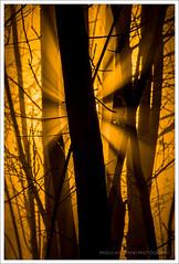 Luce nella Nebbia  Light in the Mist (Paolo Avezzano) Tags: wood light italy color colour tree silhouette backlight colore tuscany backlit toscana albero grosseto luce controluce legno 70200mmf28 bagnolo nikond300 paoloavezzano colourecstasy estasidicolore