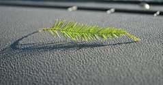 Little Leaf (tae315th) Tags: green photo leaf leafs chs greenleafs