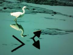 The Heron and the Anchor (Serlunar (tks for 6.2 million views)) Tags: brazil paraty flickr photos fotos flickrduel serlunar